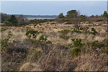 SZ0284 : Heathland with distant view to Poole Harbour by David Martin