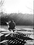 TR1558 : Fishing platform, Great Stour, Canterbury by Matt Harrop