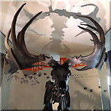SP0787 : Megaloceros skeleton, Thinktank, Birmingham by Rudi Winter