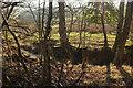 SX8683 : Stream in the Bramble Brook valley by Derek Harper