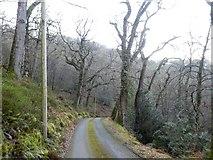 SS9043 : Road through Sideway Wood in valley of East Water by David Smith