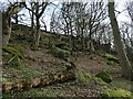 SE0543 : Millstone grit outcrop, Low Wood nature reserve by Christine Johnstone