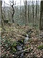 SE0543 : Small beck descending the Scout's wood by Christine Johnstone