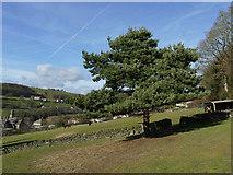 SE0424 : Pine tree and three alpacas by Stephen Craven