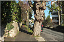 SX9364 : Asheldon Road, Wellswood by Derek Harper