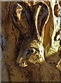 SK4443 : Head of a Hare by Neil Theasby