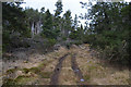 NC7616 : Track within Pollie Hill Plantation, Sutherland by Andrew Tryon