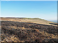 SD9593 : Burnt heather beside Turner Beck by Trevor Littlewood