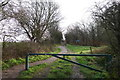ST8109 : The Wessex Ridgeway path entering woods on Okeford Hill by Tim Heaton