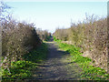 TQ7176 : Path, Cliffe Pools nature reserve by Robin Webster