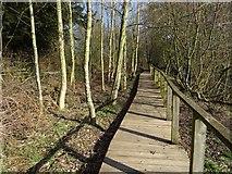 SO3958 : Boardwalk, Pembridge by Richard Webb