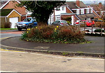 ST3091 : Late winter daffodils on a Malpas corner, Newport by Jaggery