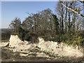 TF7104 : Disused chalk pit near Barton Bendish, Norfolk by Richard Humphrey