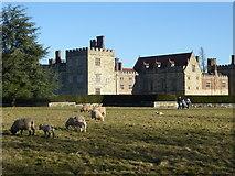 TQ5243 : Sheep and lambs at Penshurst Place by Marathon