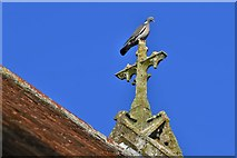 TM5286 : Kessingland, St. Edmund's Church: A convenient perch for one of many pigeons by Michael Garlick