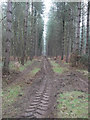 TL7899 : New Forestry work by David Pashley