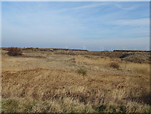 NZ5626 : Wetland near the (former) Redcar Steel Works  by JThomas