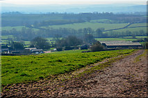 ST0215 : Mid Devon : Grassy Field by Lewis Clarke