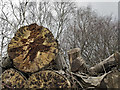 SJ9792 : Logs left to rot by Stephen Burton