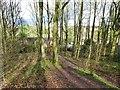 SO8690 : Swindon View by Gordon Griffiths
