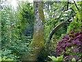 NY0972 : Dinosaurs in the Dino Park at Hetland Garden Centre by Lynne Kirton