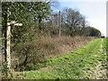 TQ4758 : North Downs Way at Knockholt by Malc McDonald