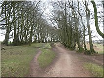 ST1636 : The Drove Road above Triscombe Combe by David Smith