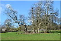 SU6017 : Small copse in field south of Droxford by David Martin