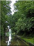 SJ7426 : Shropshire Union Canal near Knighton in Staffordshire by Roger  Kidd