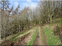 SO7641 : Path on western slopes of the Malvern Hills by Philip Halling