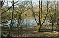 SU2461 : Pond at Wolfhall Farm by Des Blenkinsopp