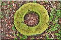 NZ5711 : A mossy bagel by Mick Garratt