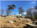 SK2680 : Rock and winter trees beneath a blue sky by Graham Hogg
