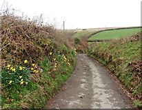 SS8129 : Smallacombe Lane by Roger Cornfoot