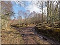 NH6751 : Craigiehowe Wood by valenta
