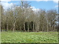 TM3669 : Site of Fish Ponds  at Sibton Abbey Ruins by Geographer