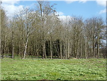 TM3669 : Site of Fish Ponds  at Sibton Abbey Ruins by Adrian Cable