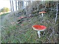SO1053 : Fungi on the bank by Bill Nicholls