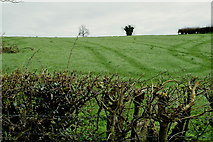 H6056 : Bare hedge, Carran by Kenneth  Allen
