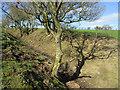 SJ9994 : Hollow way footpath by Stephen Burton