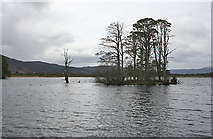 NH9617 : Island in Loch Mallachie by Anne Burgess