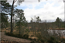 NH9617 : Shore of Loch Mallachie by Anne Burgess