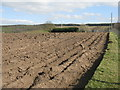 NT0945 : Newly ploughed field by M J Richardson