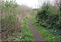 NO4202 : Fife Coastal Path, Lower Largo by Bill Kasman