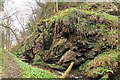 NH7459 : Gorge by the Laird's Cave by valenta