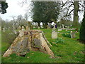 TL2320 : Tree stump in the churchyard, Knebworth Estate by Humphrey Bolton