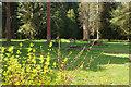 TL8294 : Lynford Arboretum by Stephen McKay