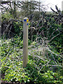 TM4899 : Marker Post at Ashby Hall Farm by Adrian Cable