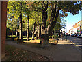 TQ3370 : Autumn comes to Crystal Palace – afternoon sun lights Westow Street by Robin Stott