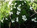 H2478 : Wild plants, Ardbarren Upper by Kenneth  Allen